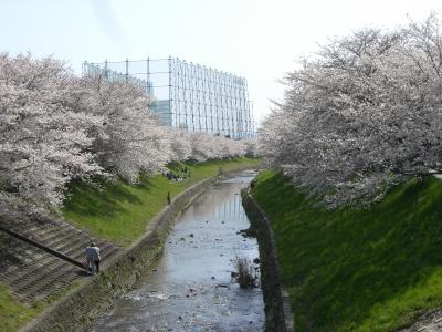 20100404sakira1