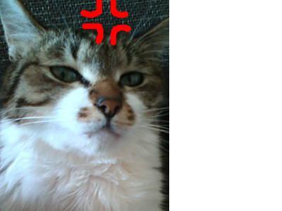 snap_adatiabc123_200934191822.jpg