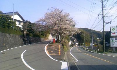 iimori_sakura01.jpg