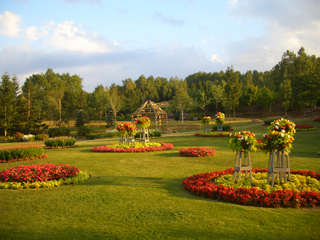 すずらん公園 花畑