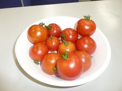 多利南営農組合トマト