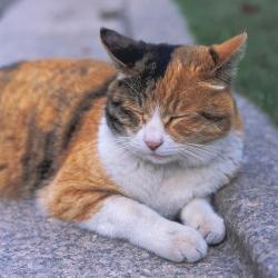 猫 ねこ 画像