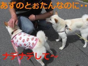 002_20100523201557.jpg