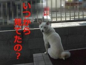 003_20100207200741.jpg