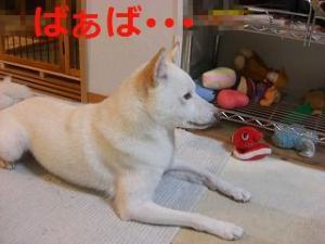 004_20100906192257.jpg