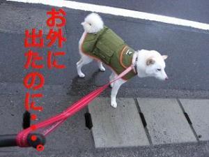 006_20100325193630.jpg