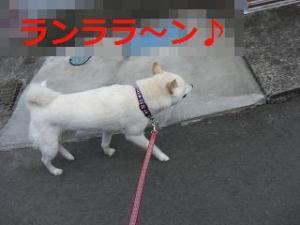009_20110303204442.jpg