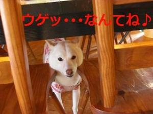 020_20100523201810.jpg