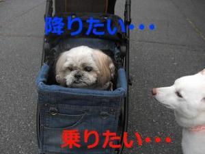 036_20101113221608.jpg