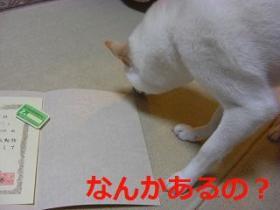 057_20100219211017.jpg