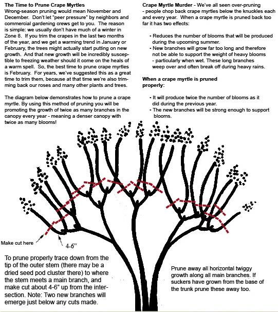 Pruning-A-Crape-Myrtle.jpg