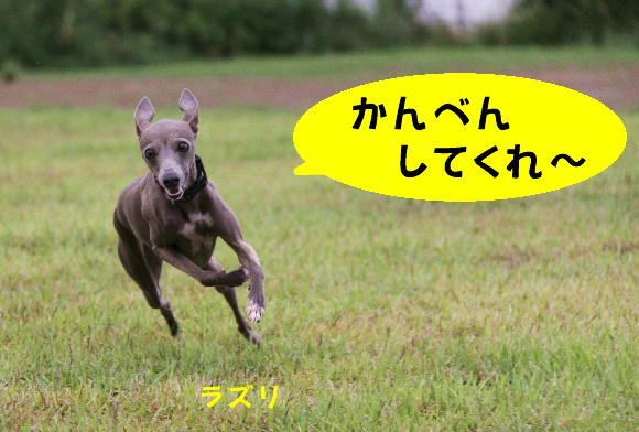 IMG_33.jpg