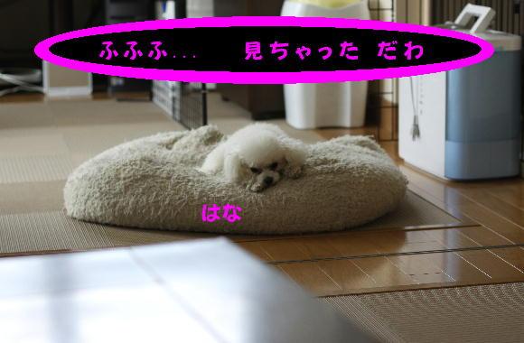 IMG_4089_20090530103438.jpg