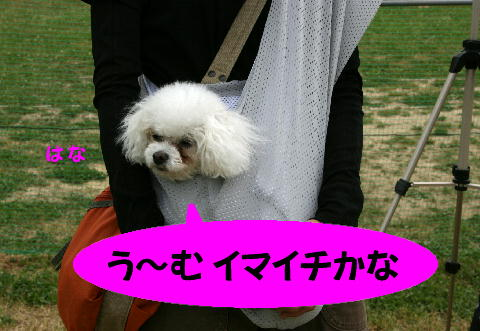 IMG_4_20090505174742.jpg