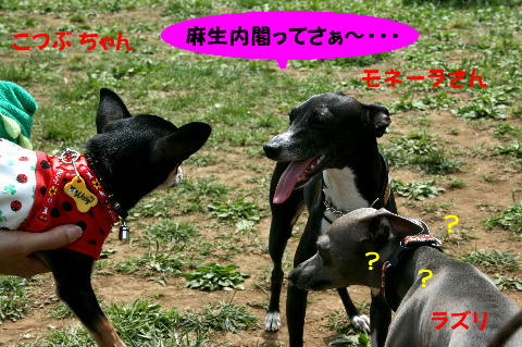 IMG_4_20090509142544.jpg