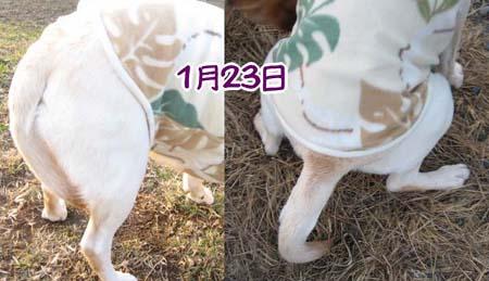 20070125_a.jpg