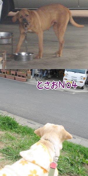 20070310_4.jpg