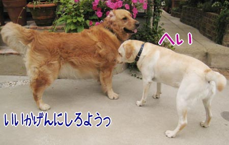 20070625_4.jpg