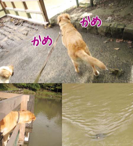 20070912_3.jpg