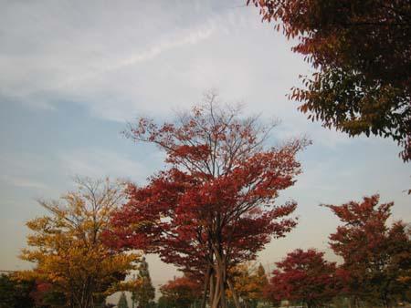 20071108_993.jpg