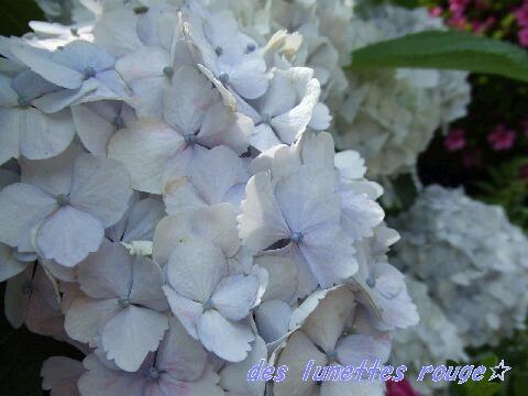 白→ブルー?