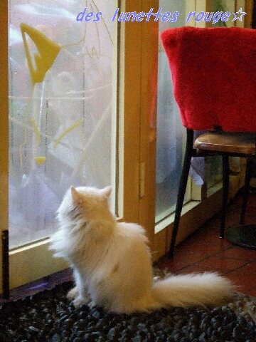 外を見るニャンコ