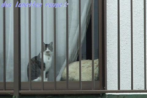 お向かいのネコさん