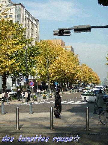 日本大通の銀杏並木