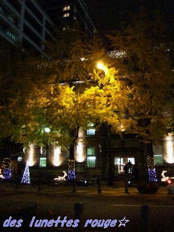 黄葉とイルミネーション:日本大通