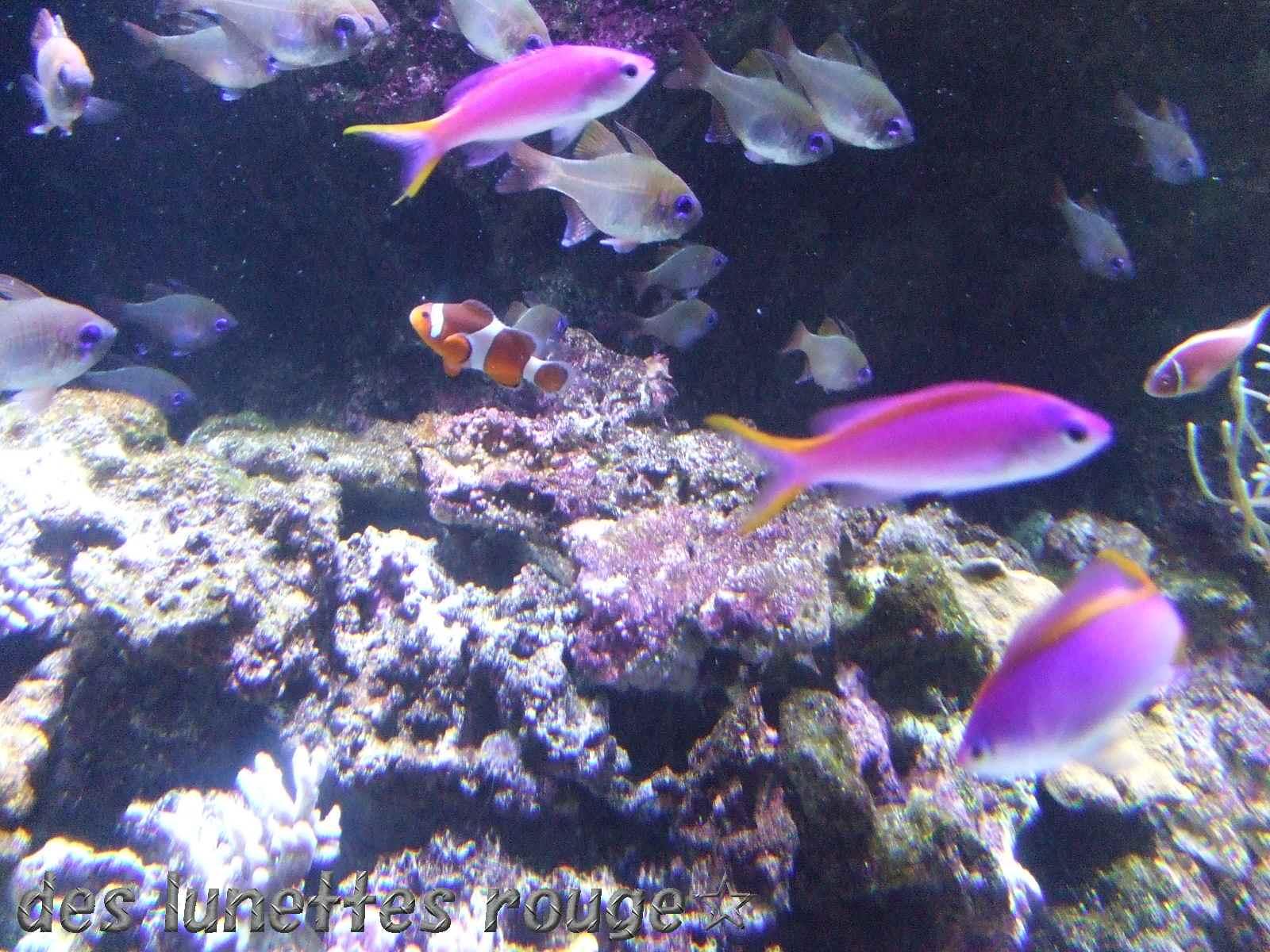 サンゴの国の魚たち?