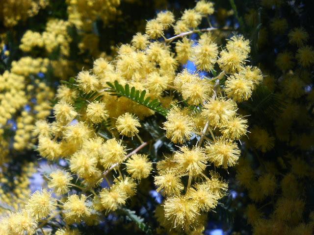 黄色い花アップ