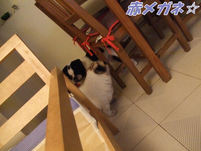 牛クン&小黄クン