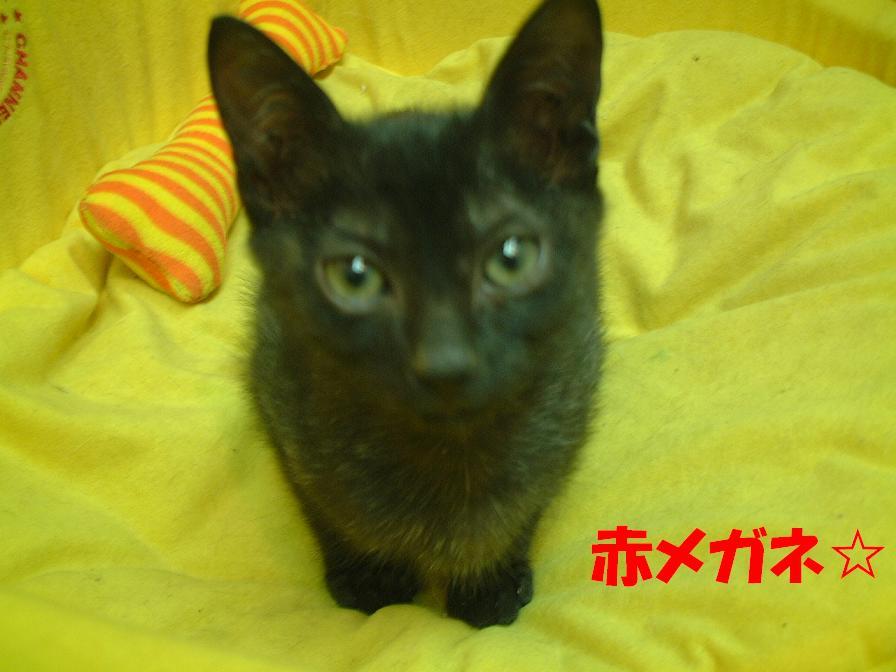 黒ニャン:六福亭