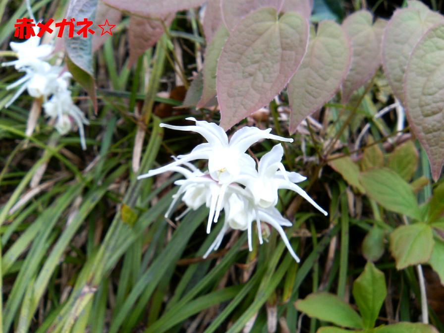 白いトゲトゲ:新潟