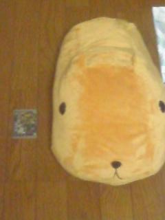 うちの抱き枕のカピさんと銀子カードの大きさ比較(´∀`*)ウフフ