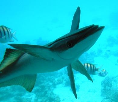 usvifish.jpg