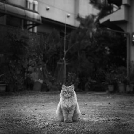 猫写真081231