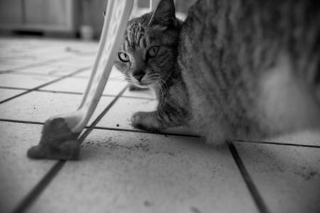 090221猫写真