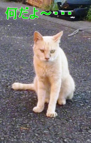 稽古場近くの野良猫