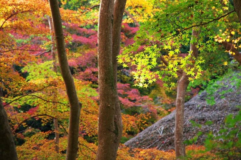 20101120arashiyama02.jpg