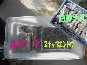 0108tanemaki.jpg