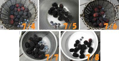 711blackberry11.jpg