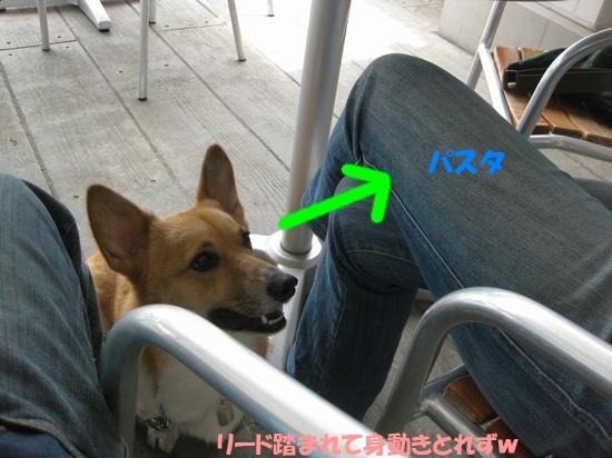 20090524_04.jpg