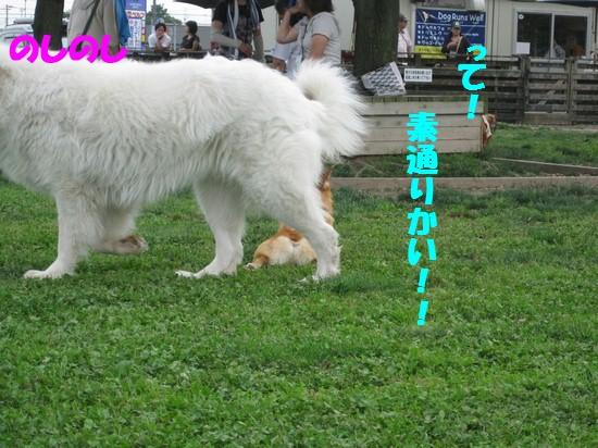 20090623_06.jpg