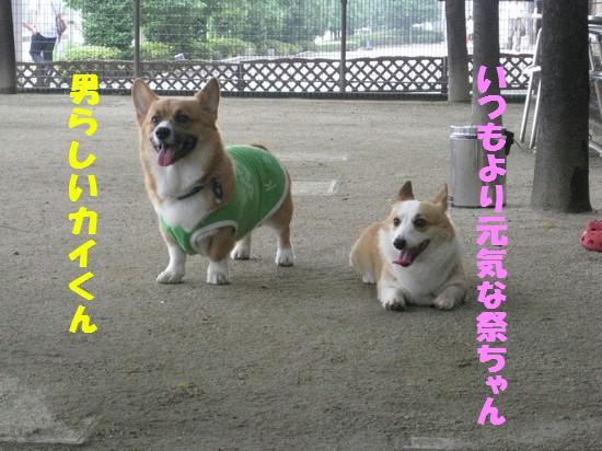 20090706_04.jpg