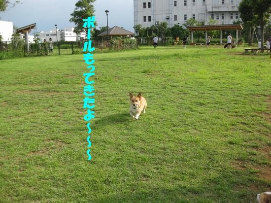 20090721_03.jpg