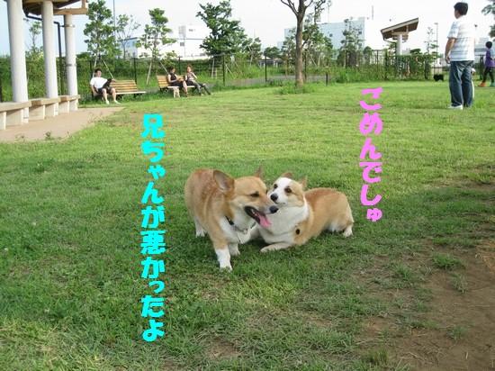 20090721_06.jpg