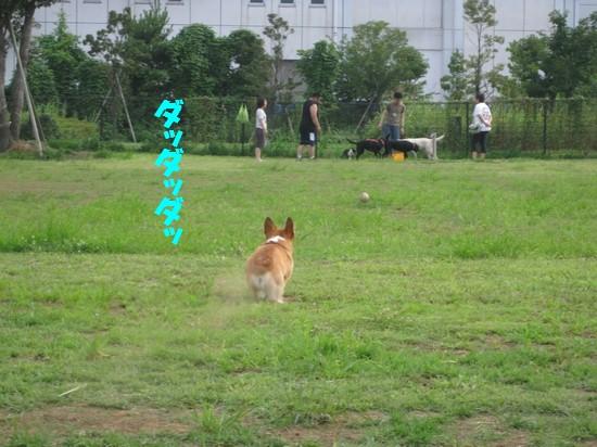 20090724_03.jpg