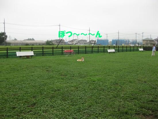 20090815_03.jpg