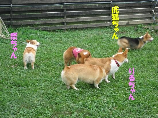 20090815_05.jpg